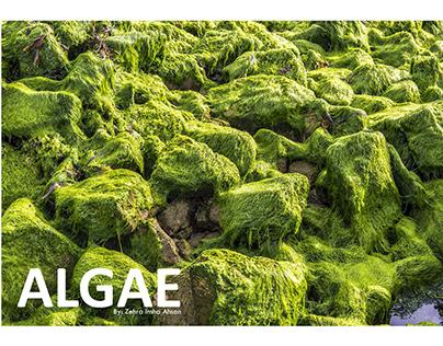 ALGAE | Fashion Representation