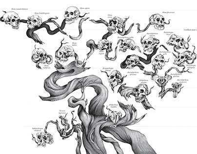 Hominin Tree of Life for Scientific American Magazine