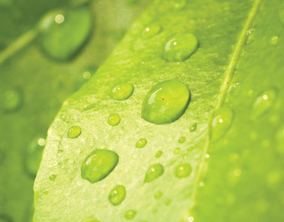 Plantation: Branding and Marketing