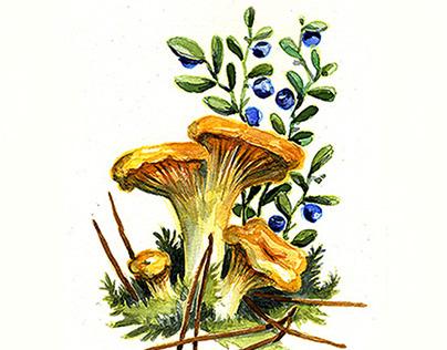 Fungi Fanatic