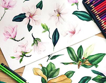 Magnolia & Ferns