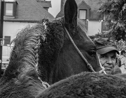 Bêtes de foire - Photography (Horses fair) - Bretagne