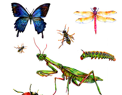 Watercolor insect collections