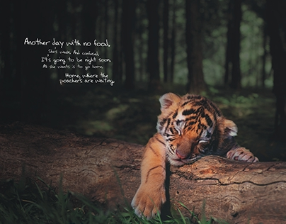 Save Our Tigers Case Study