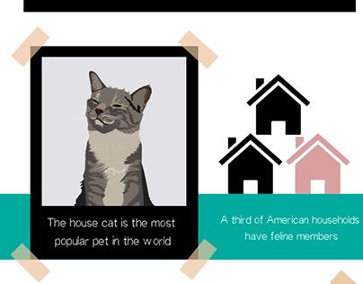 Cat infographic