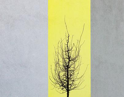 Grey VS Yellow