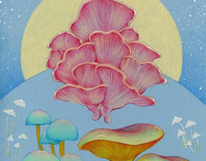 Mushrooms in moonlight