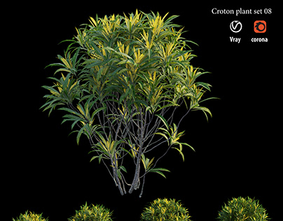 Croton plant set 08