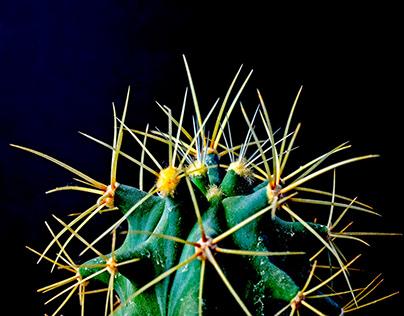 Cactus & CO.3