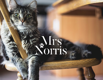 Mrs Norris | Personal Project | Packaging | Web Design