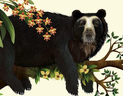 Ilustración Oso de anteojos u oso andino