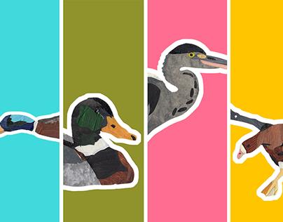 Ducks | project