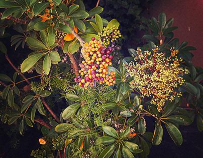 Garden shrub...
