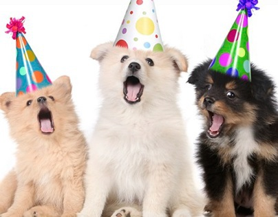 Safety Tips for Pets at Parties