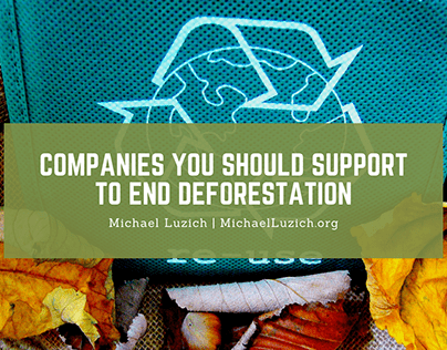 Companies You Should Support to End Deforestation
