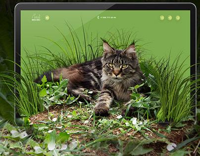 Online Store, Web site, web design, website design