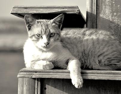 animals photography