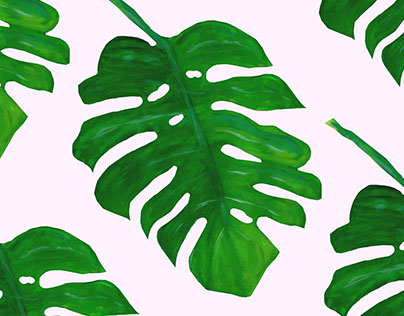 Philodendron love