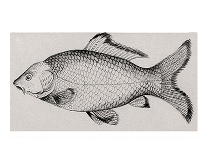Commission- pencil drawings of Carp