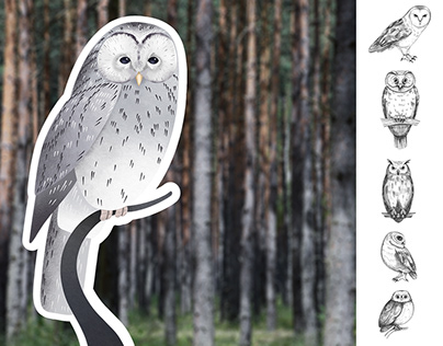 Owls: sketch and color