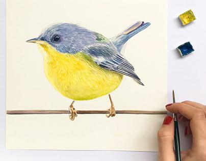 Série aves em aquarela