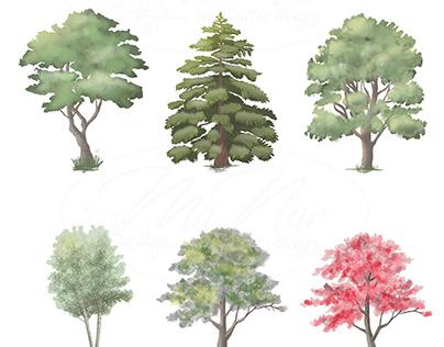 Plants Illustrations
