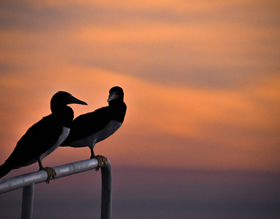 Seabirds; Souls of the Lost.