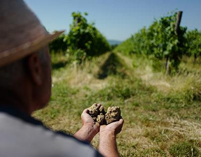 Terroir Il Borro Wines