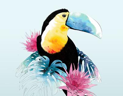 Toucan. Personal illustration