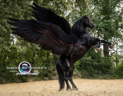 Friesenhengst Agelan as Pegasus