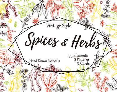 Hand drawn herbs and spices collection