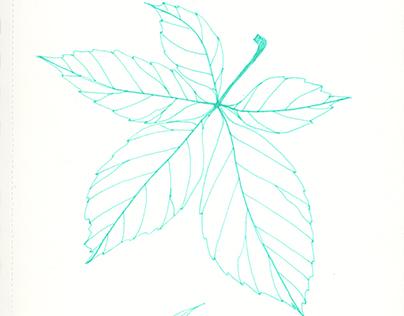 Sketchbook II - Plants