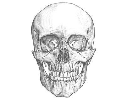 Cranium drawing & timelapse video.