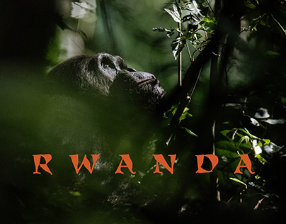 Rwanda - in search of the apes