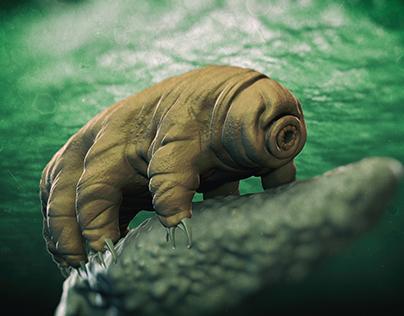 Tardigrade (Water Bear)