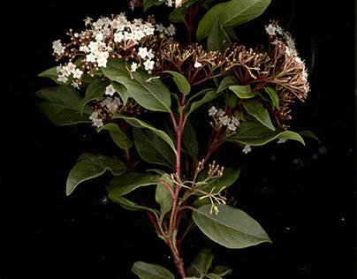 Botanic Catalog FBAUP