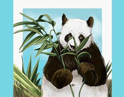 Animales ilustraciones - Animals illustrations