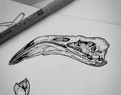 tattoo projects : animal skulls