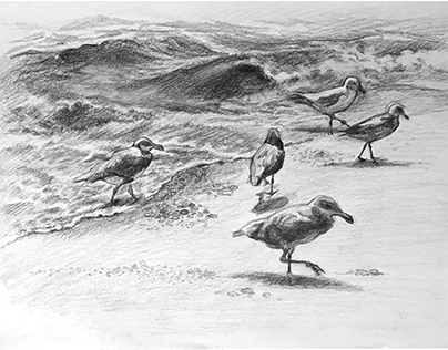 Seabirds at Sandy Hook, NJ. Summer 2017.