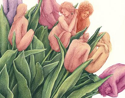 Tulips • International Women's Day