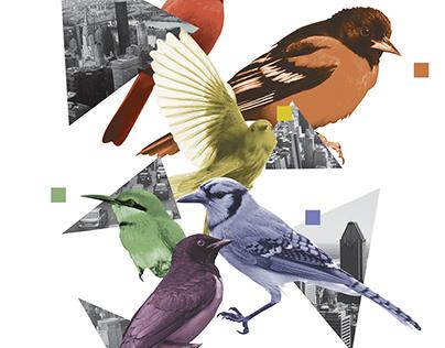 Bird Brainz Collage