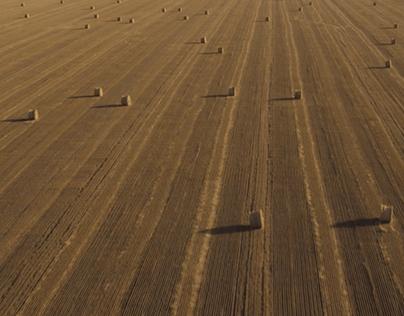 Agrocomplex / Manifesto