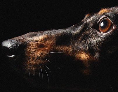 Heihei The Dog Portraits