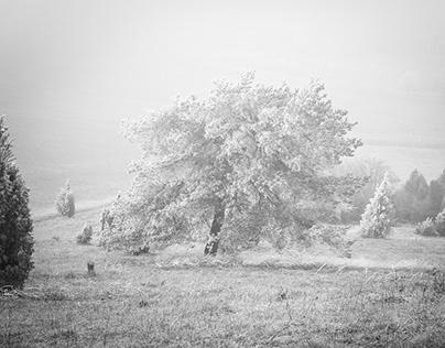 Frozen Trees [SW]