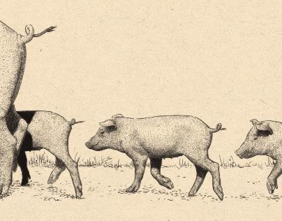 "Illustrations for ""Cinco Jotas"""