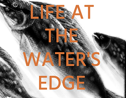 LIFE AT THE WATER'S EDGE
