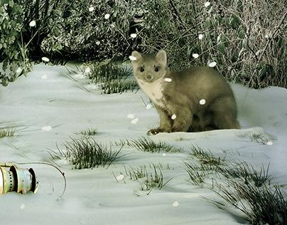WinterRoom