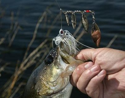 Increase Spinnerbait Fishing Success