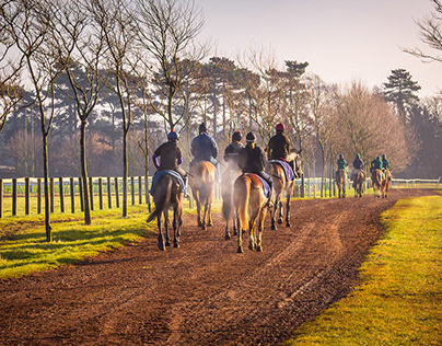 Racehorses & Training Newmarket England.