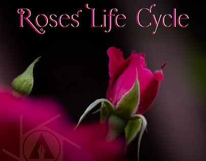 Roses Life Cycle